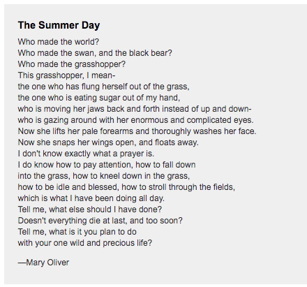 Mary Oliver--The Summer Day